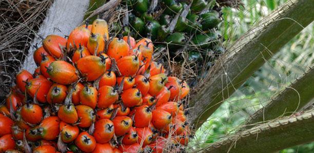 Crud of palm oil