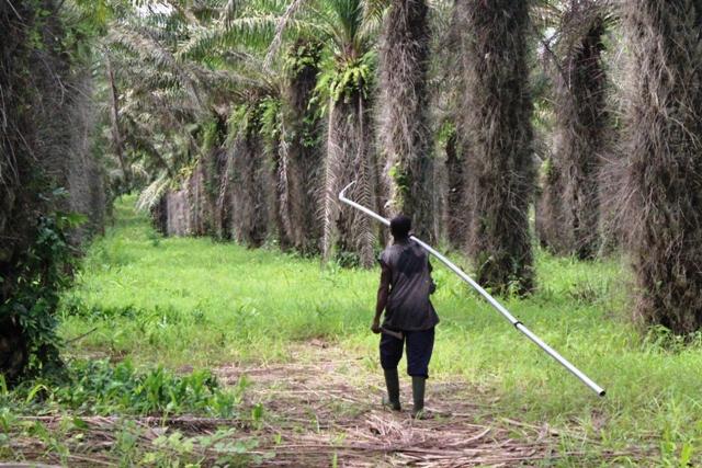 Plantation Palmafrique