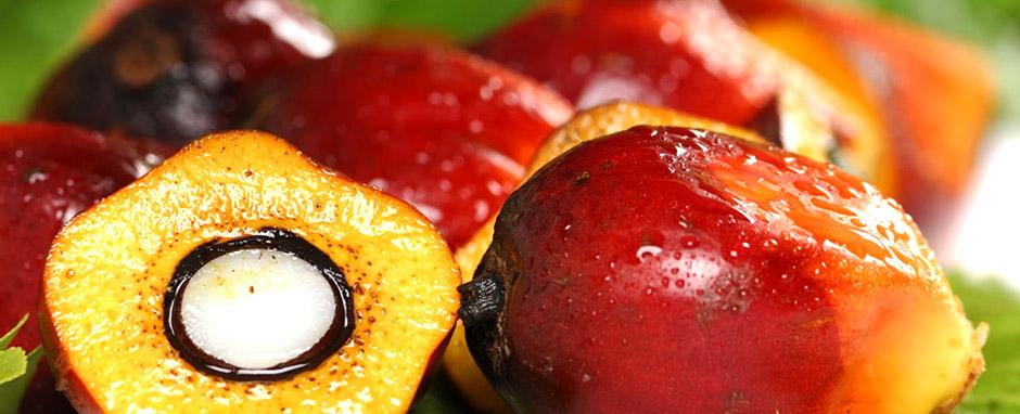 perenniser la culture industrielle du palmier à huile