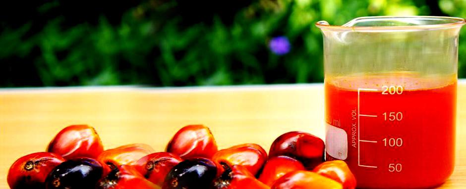 Produire et commercialiser des huiles de qualité certifiée