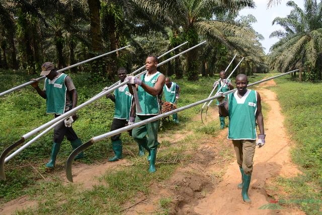 Travailleurs de Palmafrique