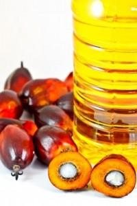 Graines et huile de palme.