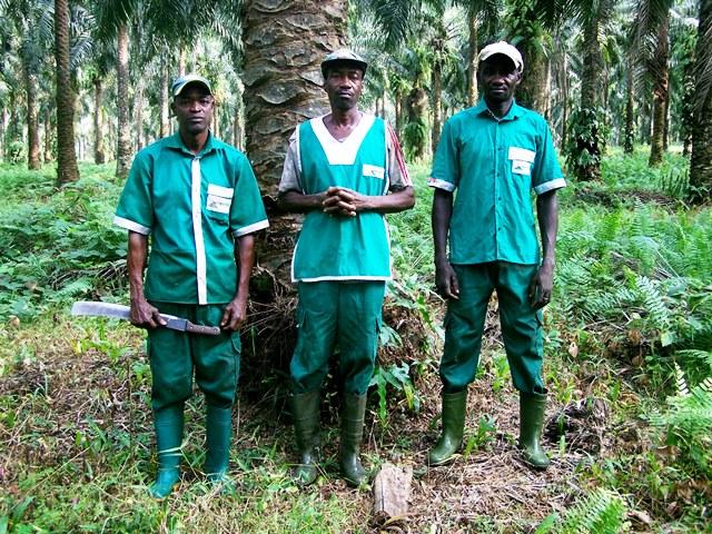 François est un modèle pour les autres récolteurs de palmafrique.