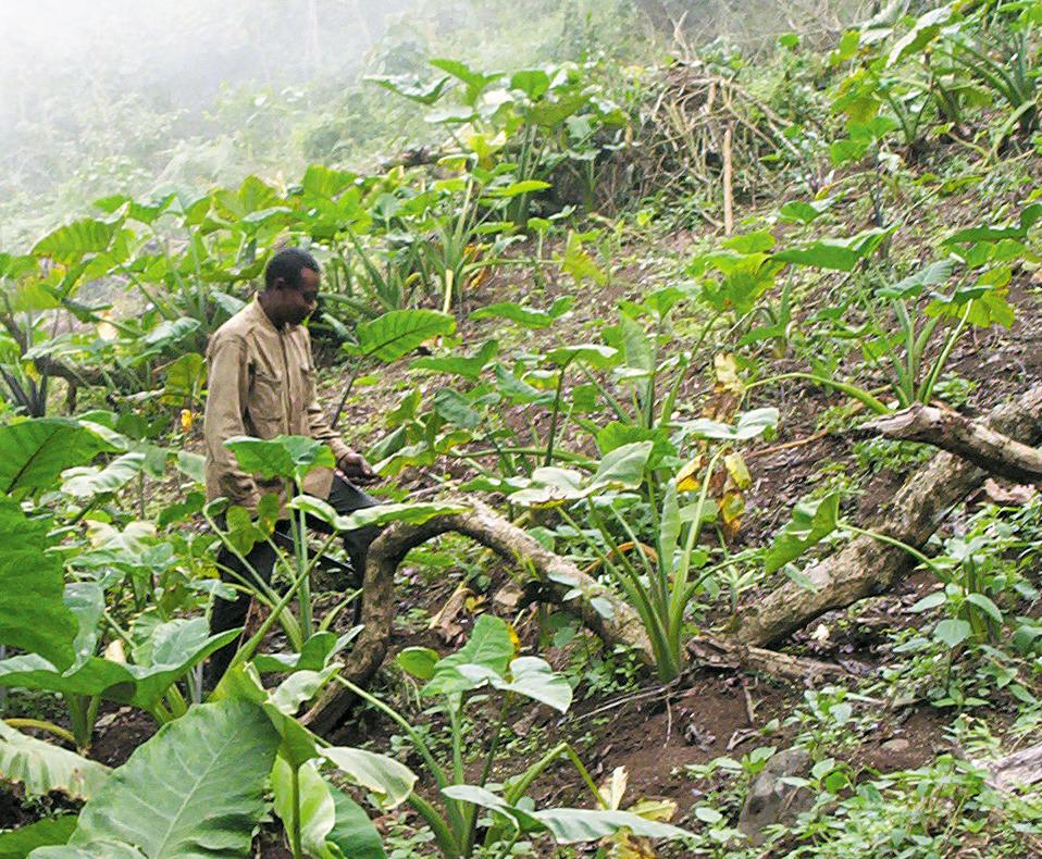 L'Afrique devra mieux investir dans l'Agriculture Photo: wikipedia.org