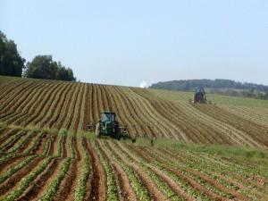 Engagements et actions en faveur de l'agriculture. Photo: wikipedia.org