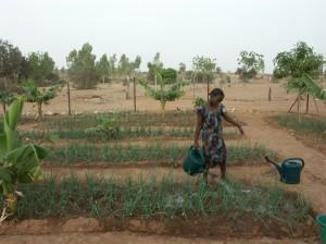 Sensibiliser pour une agriculture durable pour tous. photo: wikipedia.org