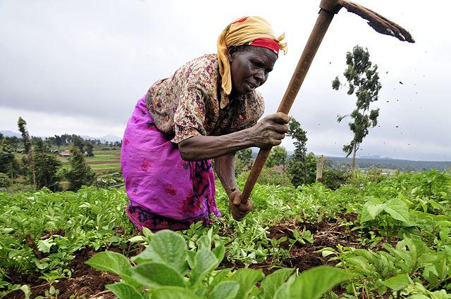 Le secteur agricole a besoin de toutes ses forces pour atteindre la sécurité alimentaire. photo: wikipedia.org