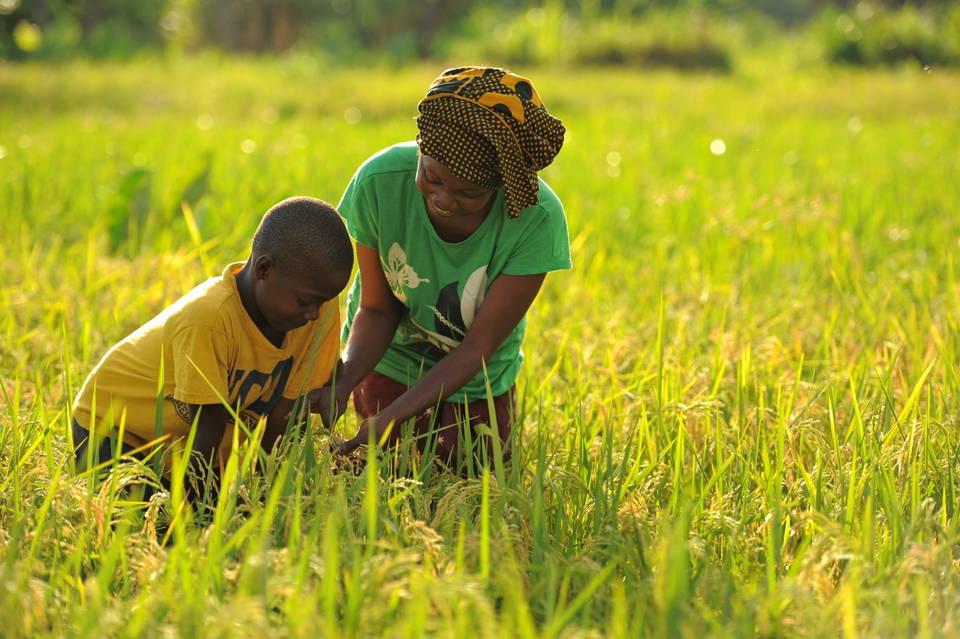 Une agricultrice et son fils dans une rizière. Photo: fao.org