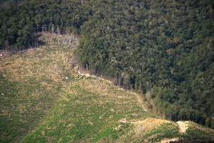 Deforestation_NZ_TasmanWestCoast_3_MWegmann