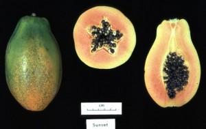 Photos de Papaye génétiquement modifiée prise sous différents angles.