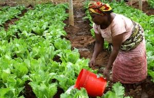 Agriculture_Afrique_Palmafrique
