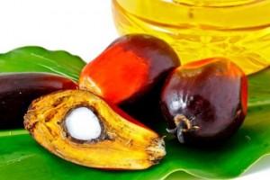 huile-de-palme_palmafrique
