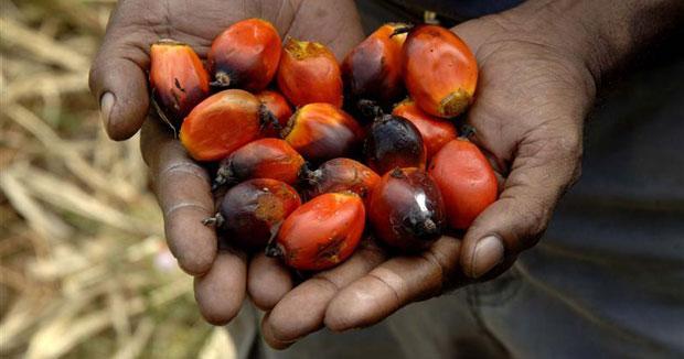 palm-oil-Palmafrique