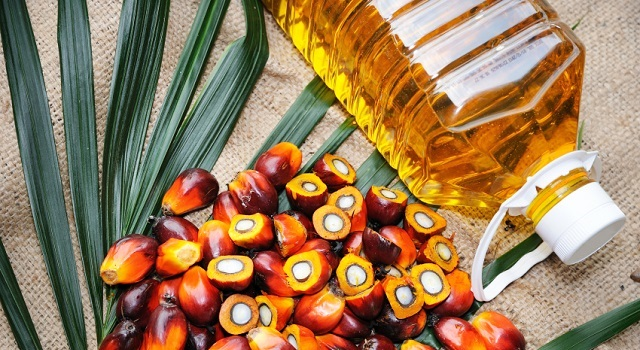 Palm_Oil_Palmafrique1