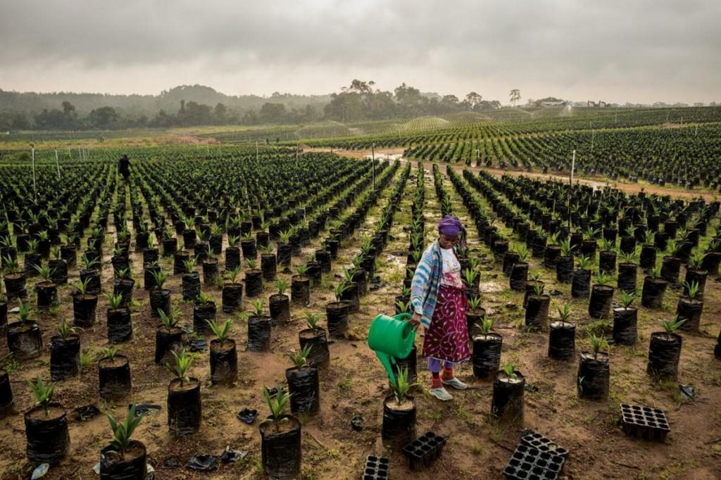 Foncier_Agricole_Afrique_Palmafrique