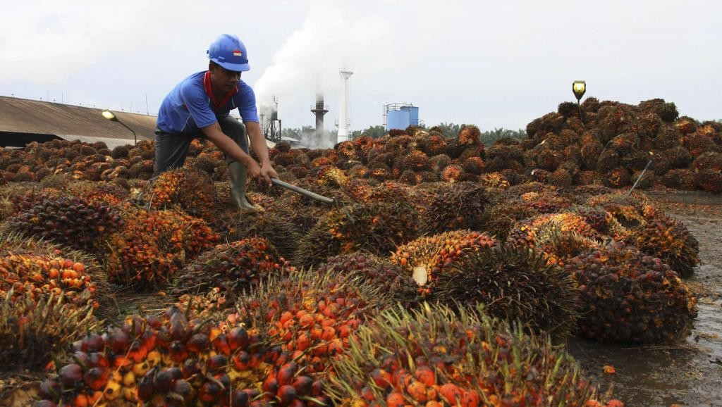 Graines de palme. Photo : Roni Bintang/REUTERS