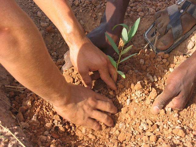 Dégradation_Terre_Déforestation_Palmafrique