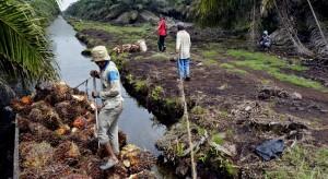 Plantation de palmier à huile et rive