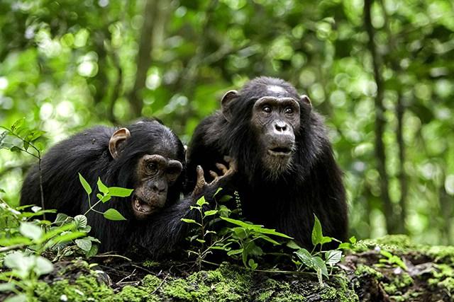 Primates_Afrique_Palmafrique
