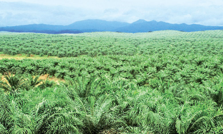 Indonésie-Huile-de-palme-forets-palmafrique