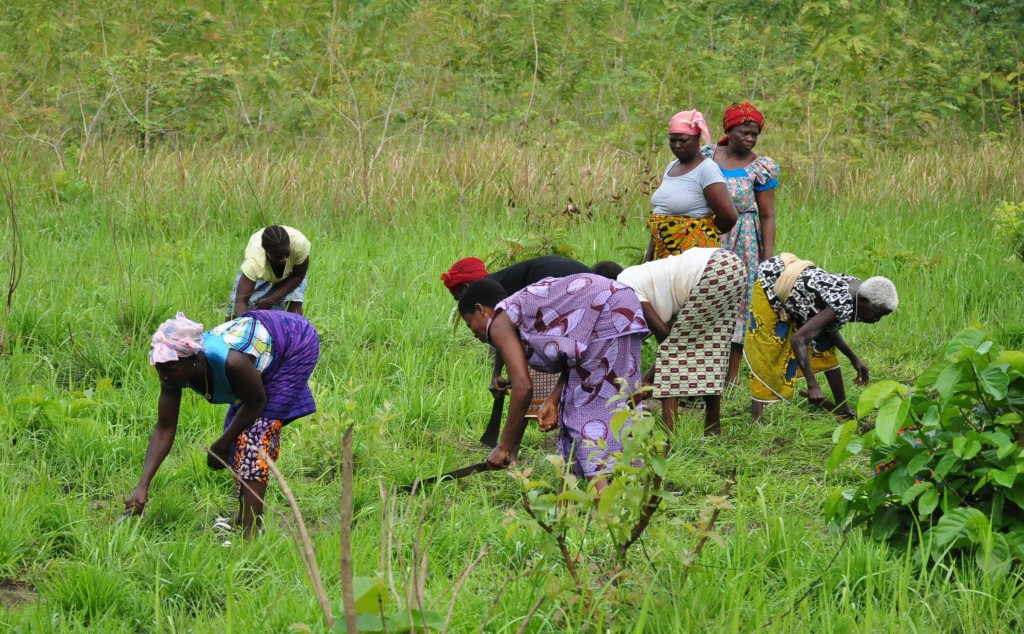 Agriculture_Côte_d-Ivoire_Palmafrique