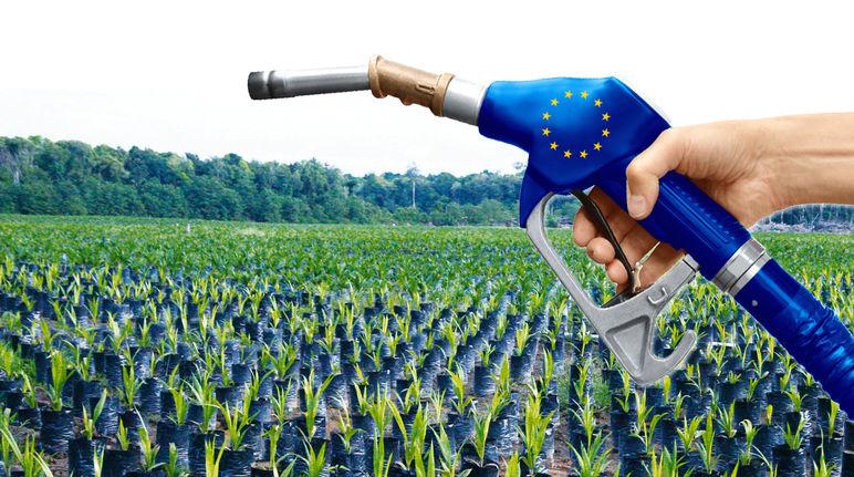 Huile_de_palme_Union_européenne_Palmafrique